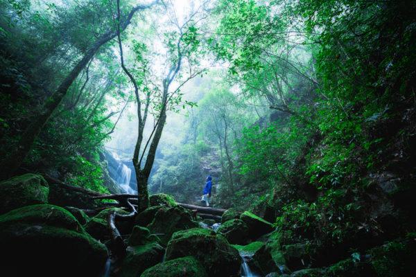 เดินป่า ที่ไหนดี